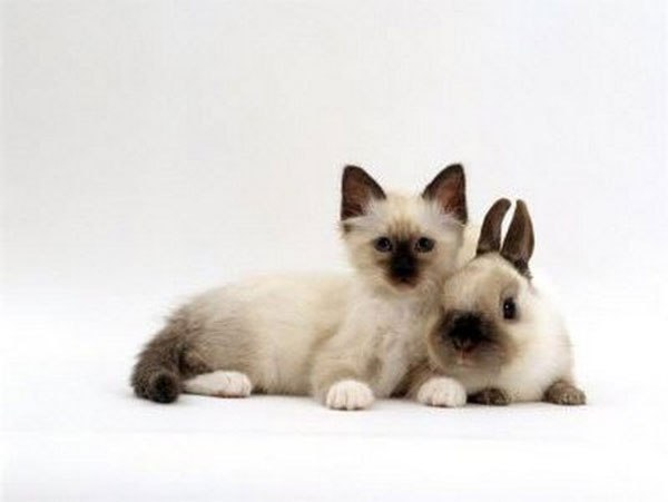 kittens-and-their-matching-bunnies-5