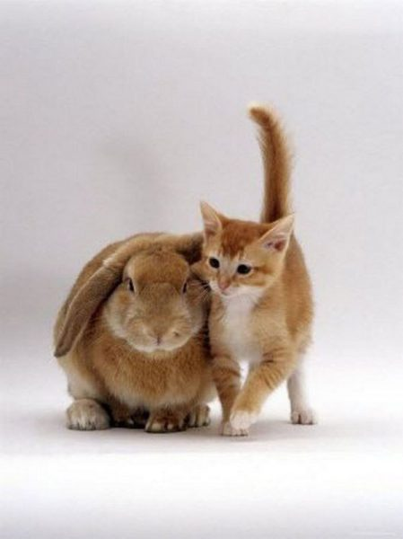 kittens-and-their-matching-bunnies-6