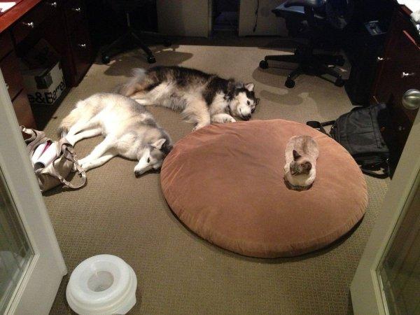katze-hund